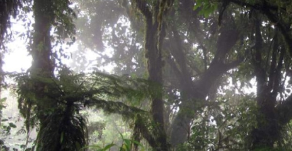 Monteverde Cloud Tour
